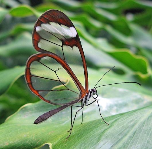 Butterfly wikimedia 0085 big