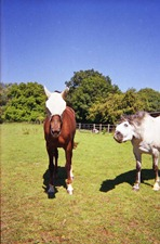 Summer-Horses---Disposable-Camera