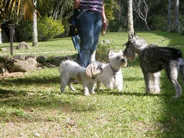 Dogs Trekking 4 (18)