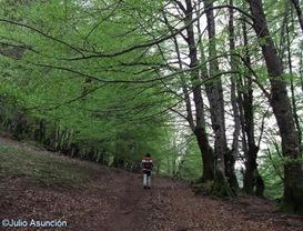 Bosque de hayas - GR-11 - Elizondo