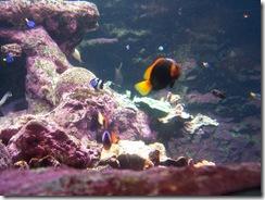 2012.09.02-029 aquarium