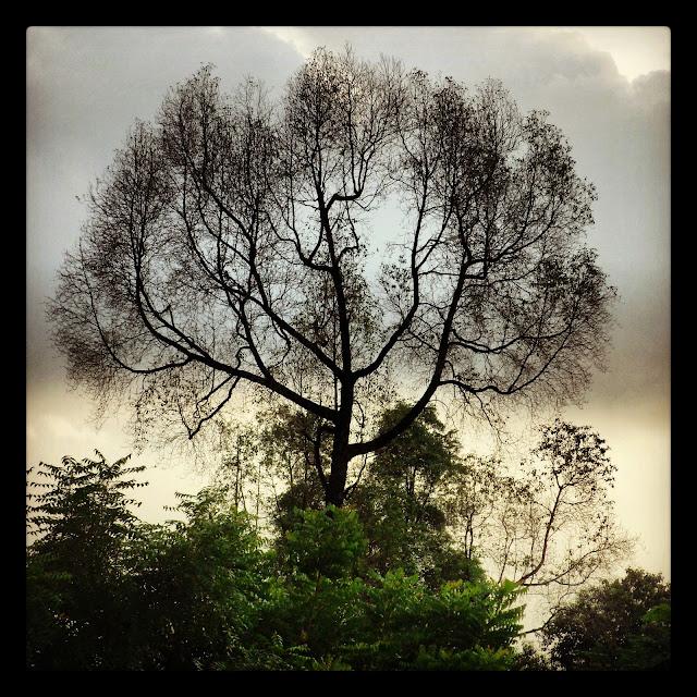 Gambar pokok usang