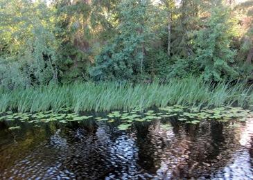 Tuulikki risteily 2012 024