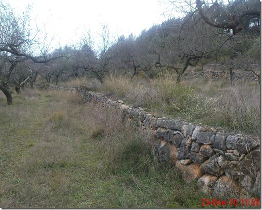 2010-01-23 Olives 004