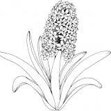 hyacinth-2-coloring-page.jpg