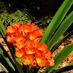 huntington gardens 049.JPG