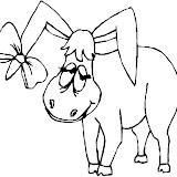 burro_11.jpg