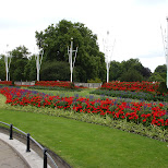 flower garden in London, London City of, United Kingdom