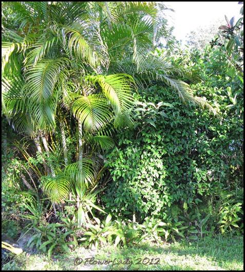 06-08 jungle8