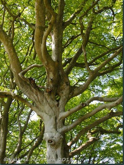 43-tree