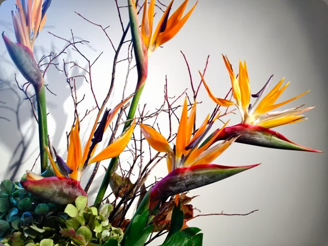 bird of paradise and florm & flora 305900_471203269598445_1378329196_n