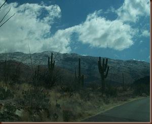 Saguaro05