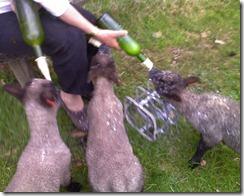 lambs on bottle 1 - Copy