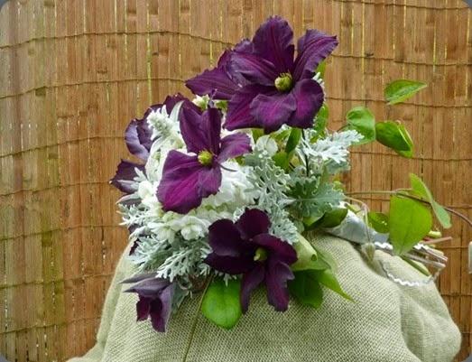clematis 998387_528210830570742_165125548_n erika's fresh flowers