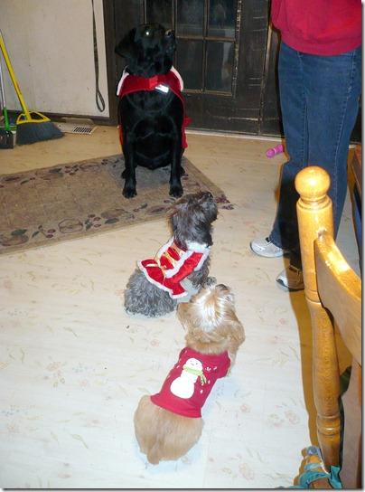 Rigg's, Sadie & Buddy12-24-12c