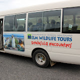Elm Wildlife Tours Peninsula Encounters - Otago Peninsula, New Zealand