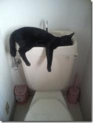 hung over cat