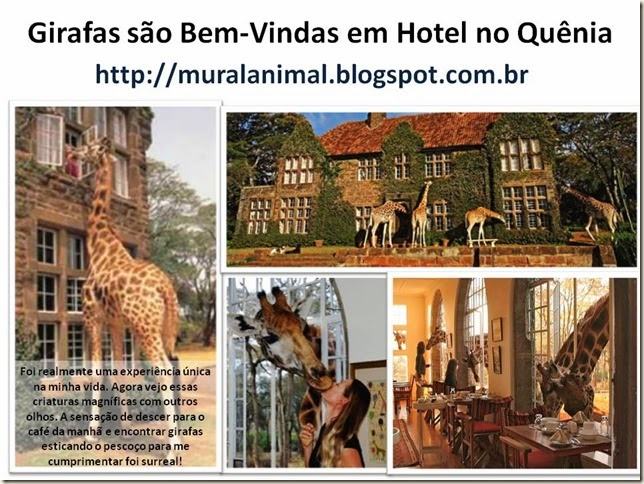 Girafas são Bem-Vindas em Hotel no Quênia