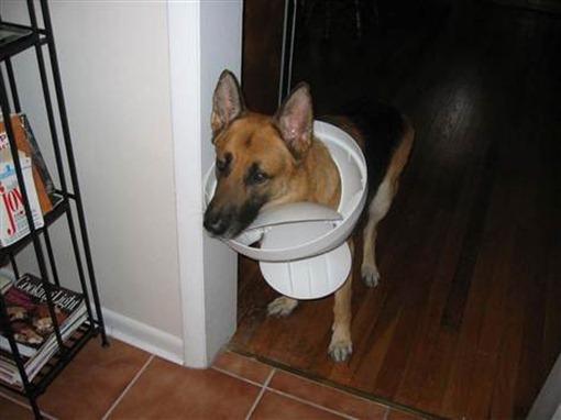 Пес проинспектировал мусорное ведро