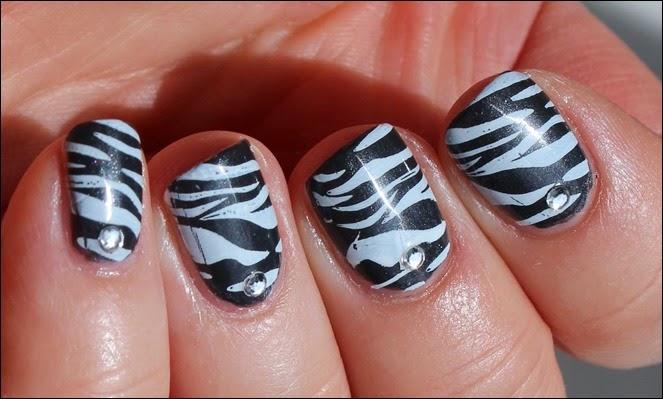 Safari Zebra 05