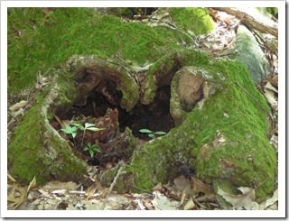 Thought this looked like a heart at base of tree