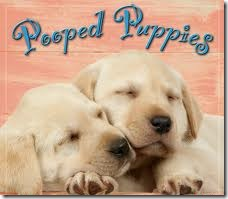 pooped pups