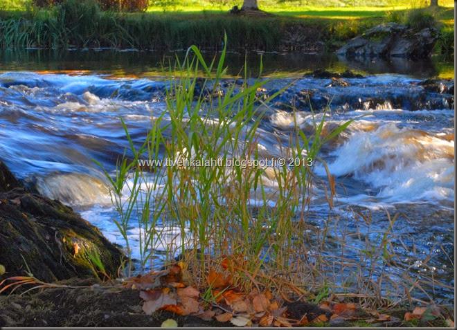 ruskaa ruohoja veden äärellä jääkiekko kaukalo muuttaa 046
