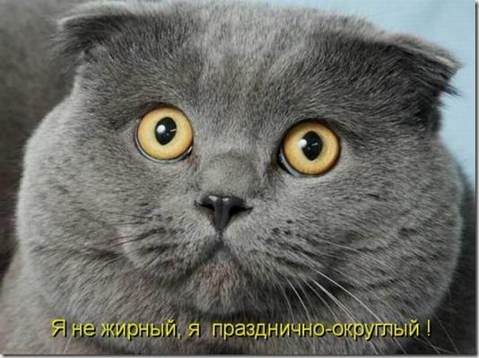 1304078167_kotomatrix_03
