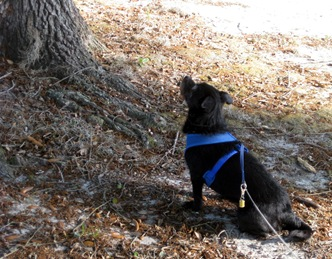 Kozmo squirrel hunting