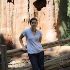 Admirez le séquoia géant au fond, et les sandales de touriste de compet' au premier plan.