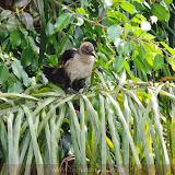 Pássaro - Jardim Botanico - Guayaquil - Equador