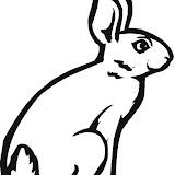 1266374576_Bunny_3.jpg