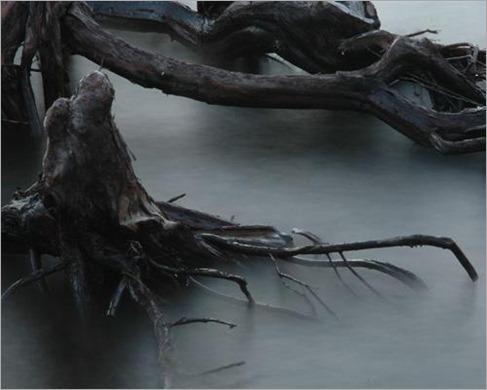 Anthropomorphic tree