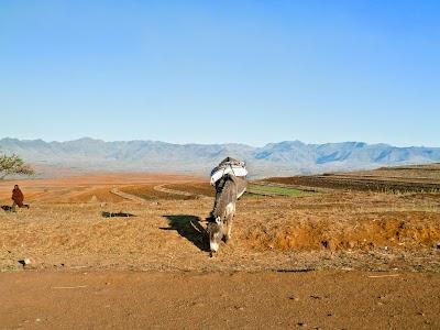 SouthernAfrica331.jpg
