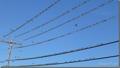 morning walk birds_005