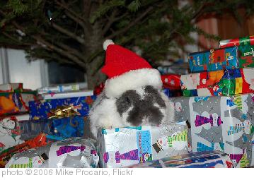'Santa Paws' photo (c) 2006, Mike Procario - license: http://creativecommons.org/licenses/by-nd/2.0/