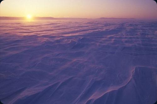 Polar Obsession35