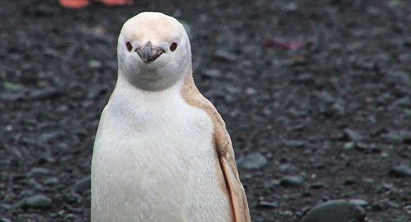 The penguin was spotted during a nature expedition to  Antarctica