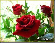 rosaroja-LoBocAs-04
