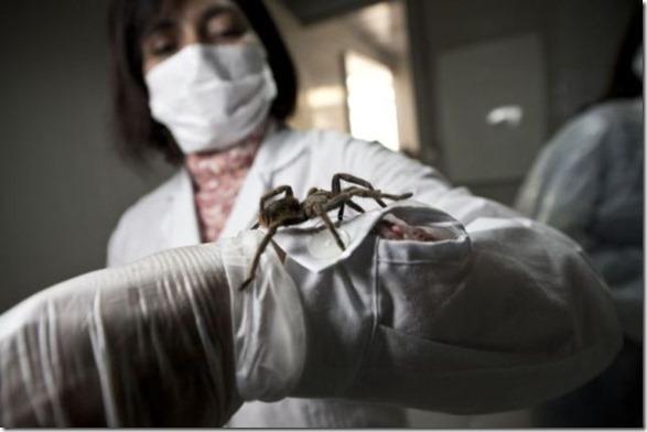 spider-farmer-juan-8