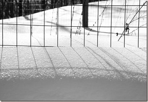 BW-Garden-Fence