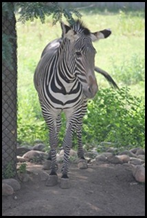 Zoo5 069