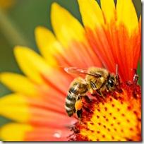 SaveEarthsHoneybees_250x250[1]