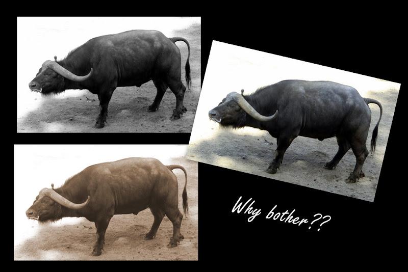 2011-08-13 zoo3