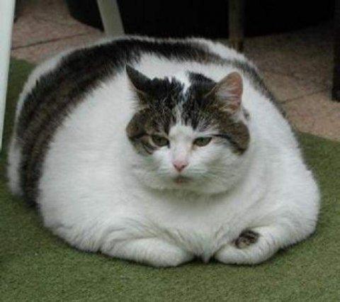 Obezite İle İlgili Araştırma Sonuçları