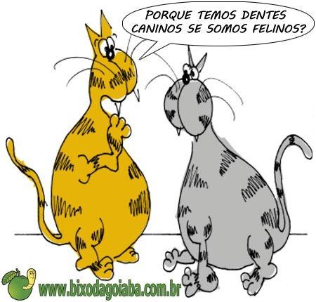 duvida-dos-gatos-veterinaria