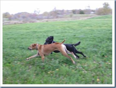20111016_dogs-running_015