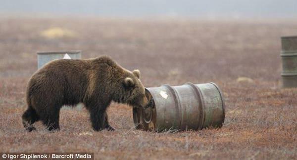 9- Ursos viciados