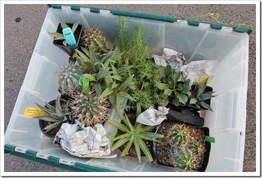 120801_plants