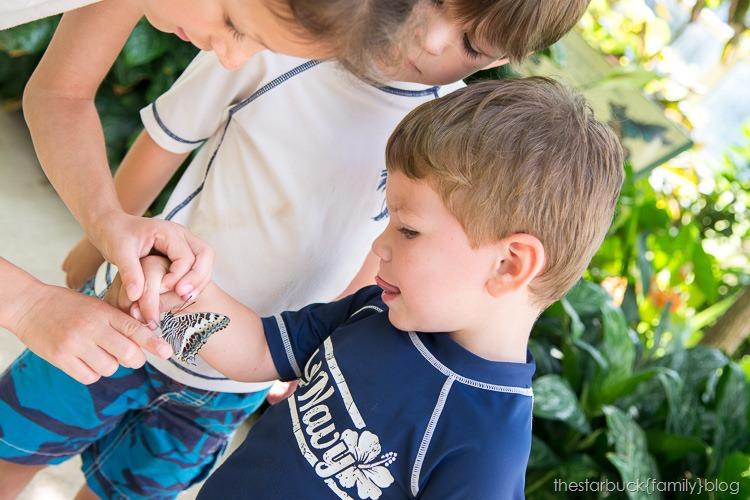 Callaway Gardens butterfly garden blog-23